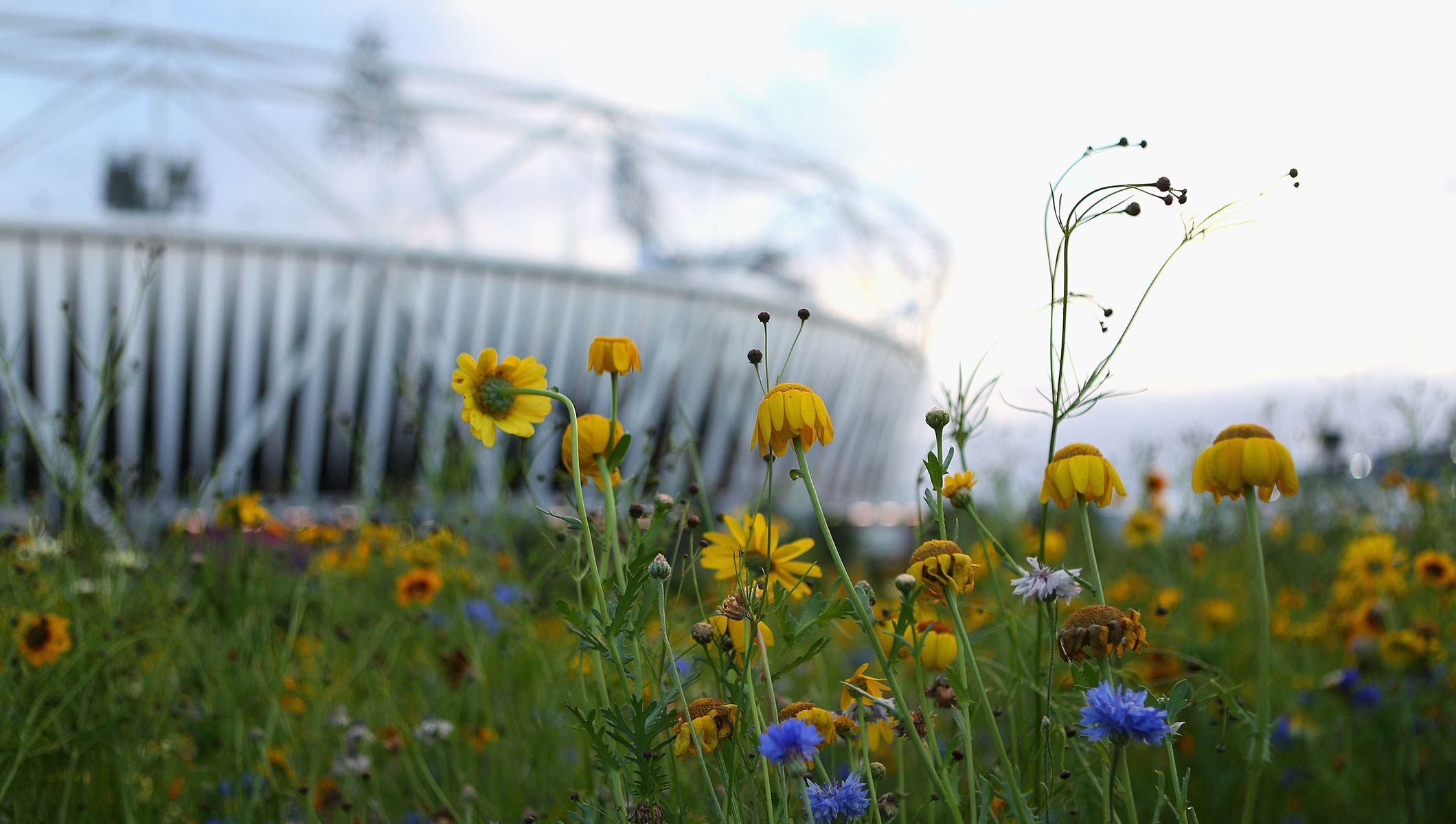 IOC-supported guide outlines how sustainable venues can help conserve nature